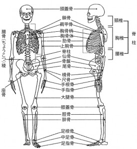 図2.3骨格の構造