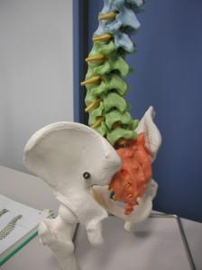 図2.4 腰椎骨盤