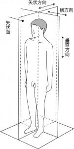 図2.5 矢状面