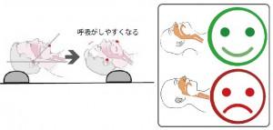 研究頭頚部→
